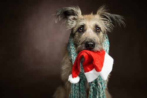 holiday decor pet safety dog cat puppy kitty santa hat scarf