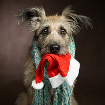 Holiday Decorating Safety with Pets