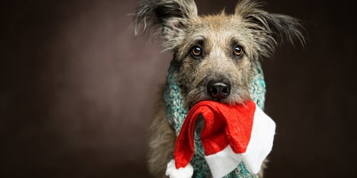 holiday decorating with pets
